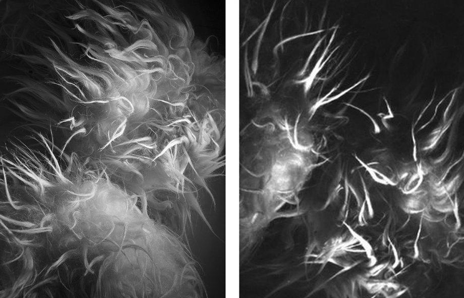Guenter Weseler, Überwucherung, Installation aus Atemobjekten (Detail), 1972, Naturfell, elektromechanische Bewegunssteuerung; Guenter Weseler, Überwucherung, Installation aus Atemobjekten (Detail)