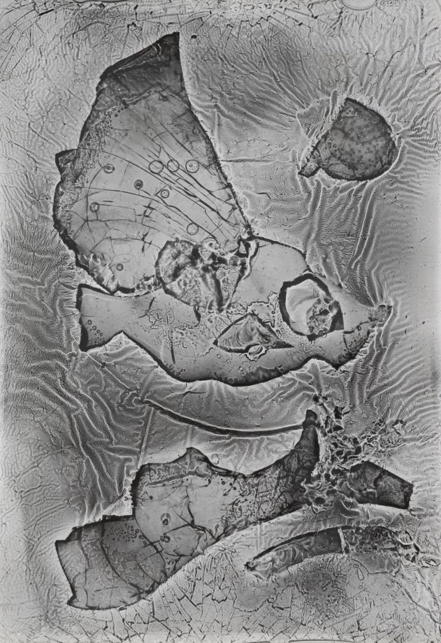 Heinz Hajek-Halke, Das diluviale Aquarium, 1960, Silbergelatindruck, 29.5 x 20.3 cm